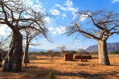 Dom otaczający baobabów drzewami w Afryka Obrazy Royalty Free
