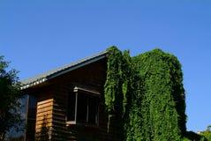 Dom przerastający z zielonym bluszczem zdjęcie stock