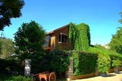 Dom przerastający z zielonym bluszczem obraz stock