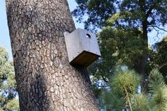 Dom ptaki robić drewno obrazy royalty free