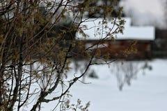Dom w lasowej zimie Obraz Royalty Free