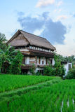 Dom w ryżowych polach Ubud, Bali, Indonezja Obrazy Stock