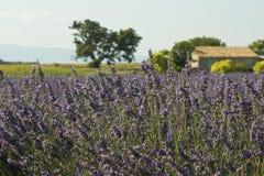 dom wiejski śródpolny lawendowy Provence Zdjęcia Royalty Free