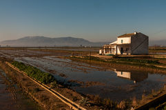 Dom wiejski z ryż polami w Ebro delcie Obraz Stock