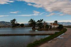 Dom wiejski z ryż polami w Ebro delcie Zdjęcia Stock