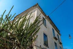 Dom z kaktusem, ma?a ulica W?ochy, podr?? zdjęcie royalty free
