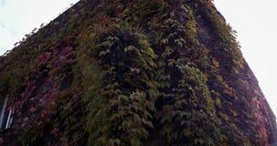Dom zakrywający w bluszczu zdjęcie wideo