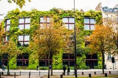 Dom zakrywający zielonymi roślinami Fotografia Stock