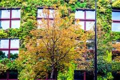 Dom zakrywający zielonymi roślinami Obrazy Stock