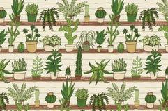 Dom zasadza kaktusa wzór Obraz Stock