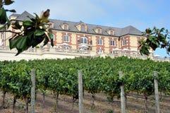 Domaine Carneros vineyard, Napa Valley Royalty Free Stock Photography