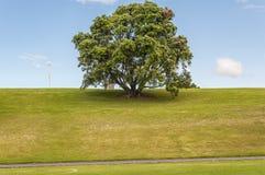Domaine d'Auckland images libres de droits