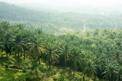 Domaine d'huile de palme image stock
