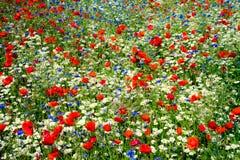 Domaine de la couleur dans la campagne d'été Image stock
