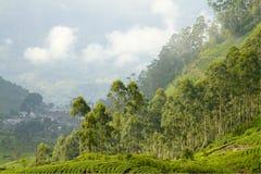 Domaine de thé au Sri Lanka Photo stock