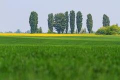 Domaines couleur de paysage Images stock