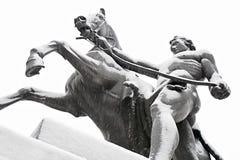Domando dei cavalli Fotografia Stock