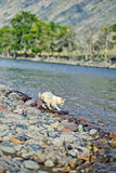 Domastic cat drinking from the river on the shore Royalty Free Stock Photos