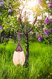 Dombra kazakh instrument. In the garden with blooming lilac flowers Stock Images