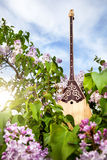 Dombra kazakh instrument. In the garden with blooming lilac flowers at blue sky Royalty Free Stock Images