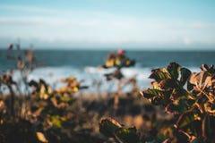 Domburg海岸线,Nethelands 图库摄影
