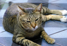 Domderande katt arkivfoton
