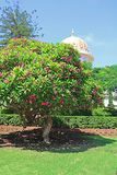 Dome of the Bab Shrine on the slopes of the Carmel Mountain and blooming tree in Haifa city, Israel. Middle East royalty free stock photos