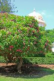 Dome of the Bab Shrine on the slopes of the Carmel Mountain and blooming tree in Haifa city, Israel. Middle East stock photos