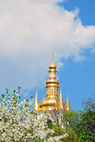 Dome, blue sky and flowering tree Royalty Free Stock Photo