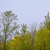 The dome of the Church among the trees. Beautiful view stock photography