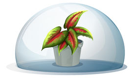A dome with a plant inside a gray pot vector illustration