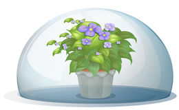A dome with a pot with plant vector illustration