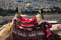 Camel Hump & Dome of the Rock Royalty Free Stock Images
