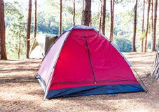 Dome tent in camping site with pine trees and lake Stock Photos