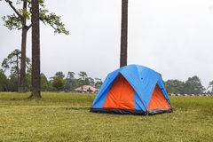 Dome tents camping near pine tree on high mountain with fog Royalty Free Stock Photos