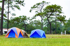 Dome tents camping near pine tree on high mountain Royalty Free Stock Photography