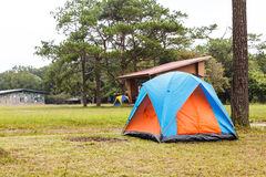Dome tents camping near pine tree on high mountain Stock Photography