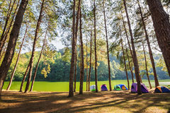 Dome tents beside the lake among pine trees Stock Photo