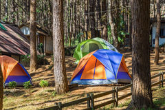 Dome tents among pine trees Stock Photos