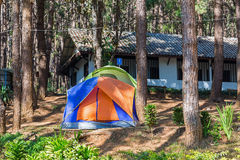 Dome tents among pine trees Royalty Free Stock Image