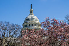 Dome of US Capitol Building in Washington, DC in Springtime. Dome of the US Capitol building in Washington, D.C. in the springtime, with budding cherry blossoms Royalty Free Stock Images