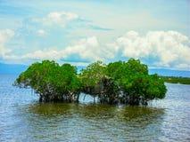 Domek na drzewie w Namorzynowym Filipiny Obrazy Stock