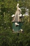 domekdla ptaków Zdjęcia Royalty Free