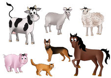 Domestic animals Royalty Free Stock Photo