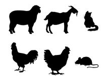 Domestic animals Stock Images