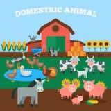 Domestic Animals Concept Stock Photos
