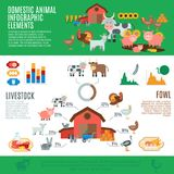 Domestic Animals Infographics Stock Photography