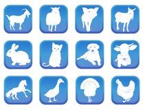 Domestic animals 1 Stock Photography
