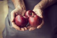 Domestic apples Stock Photos