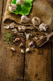 Domestic bio garlic - Czech, spices and fresh microgreens Domestic bio garlic Stock Images